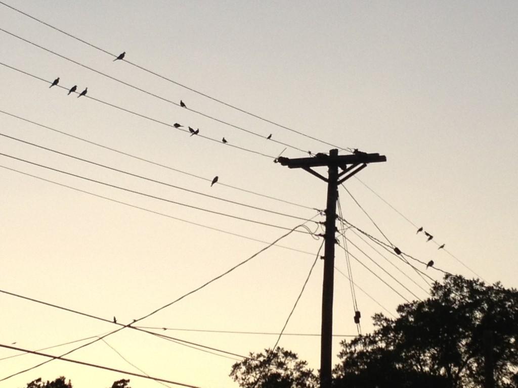 Case of the Birds