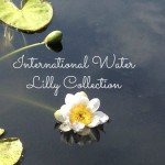 Wordless Wednesday: International Waterlily Collection w Linky