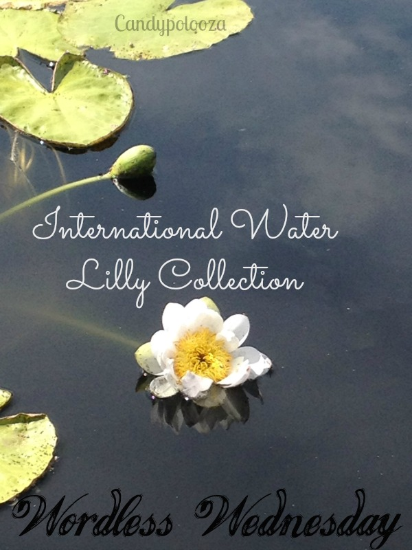 1 WW Water Lilly Collection