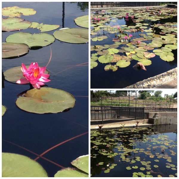 3 WW Water Lilly Collection