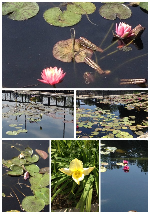 4 WW Water Lilly Collection