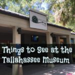Things to See at the Tallahassee Museum #IHeartTally AD
