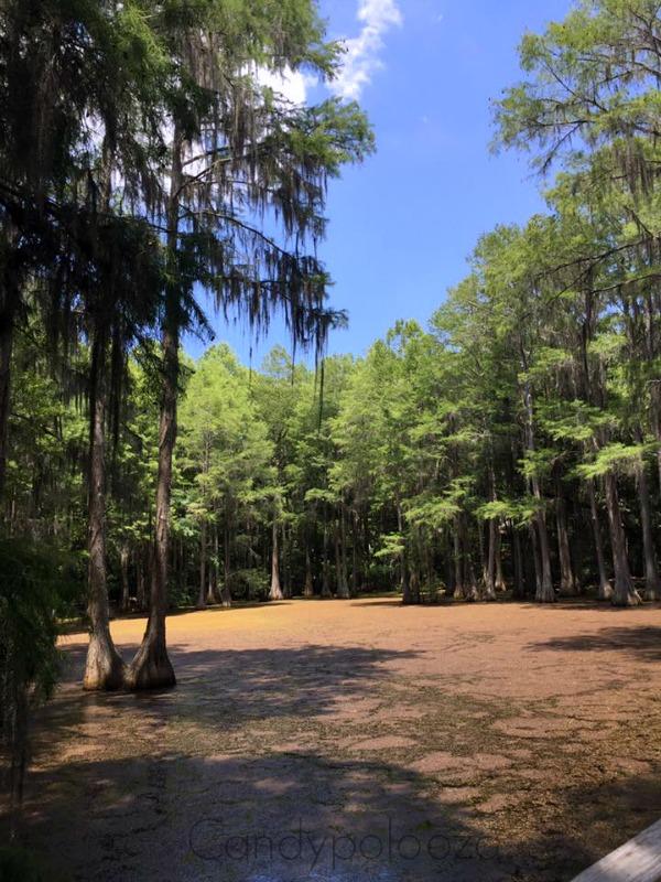 swamp tallahassee