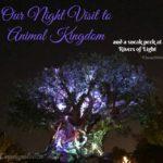 Our Night Visit to Animal Kingdom #DisneySMMC