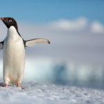 Disneynature's Penguins Earth Day Surprise #DisneynaturePenguins