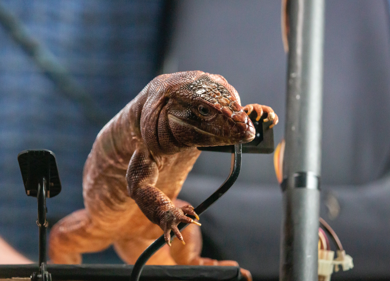 Zeke the Tegu Lizard (voiced by Paul Dobson) showing off his tech skills image on Candypo.com
